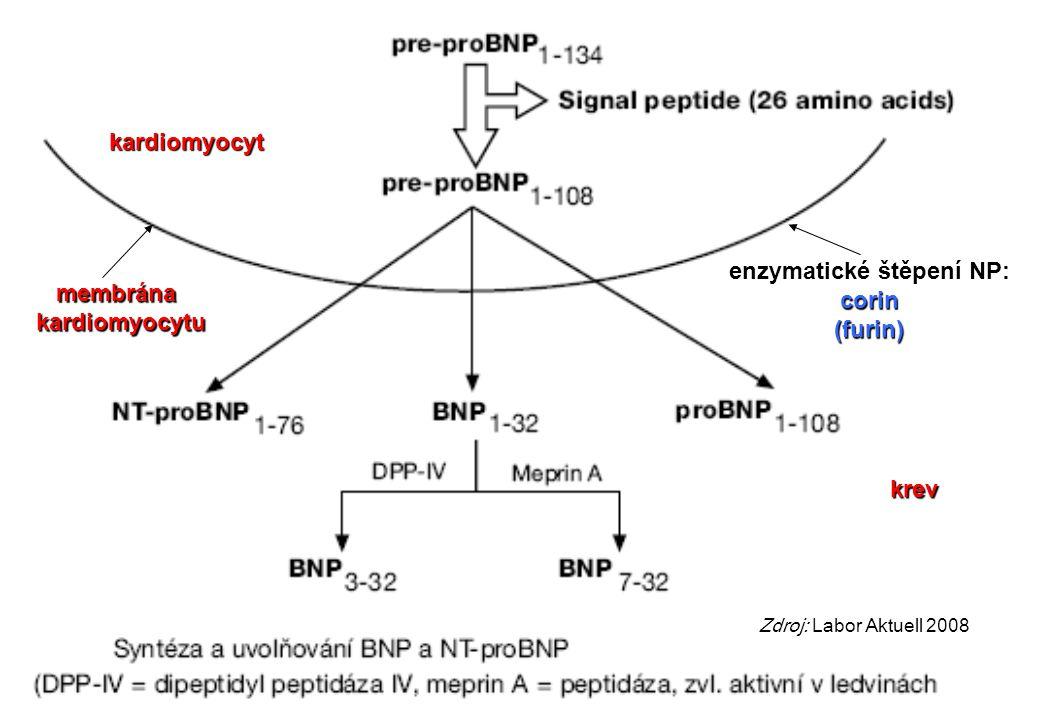 Zdroj: Labor Aktuell 2008 membrána kardiomyocytu kardiomyocyt krev enzymatické štěpení NP: corin (furin)