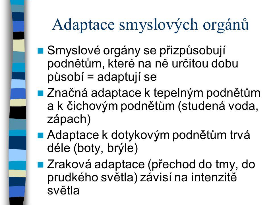 Adaptace smyslových orgánů Smyslové orgány se přizpůsobují podnětům, které na ně určitou dobu působí = adaptují se Značná adaptace k tepelným podnětům