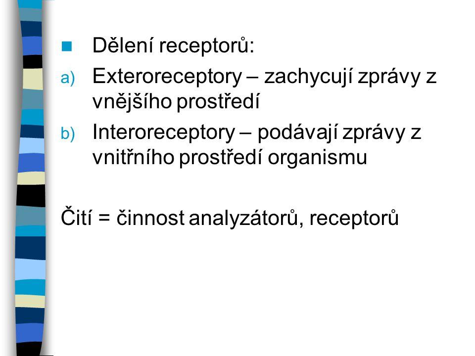 Dělení receptorů: a) Exteroreceptory – zachycují zprávy z vnějšího prostředí b) Interoreceptory – podávají zprávy z vnitřního prostředí organismu Čití