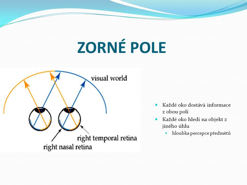 ZORNÉ POLE Každé oko dostává informace z obou polí Každé oko hledí na objekt z jiného úhlu hloubka percepce předmětů