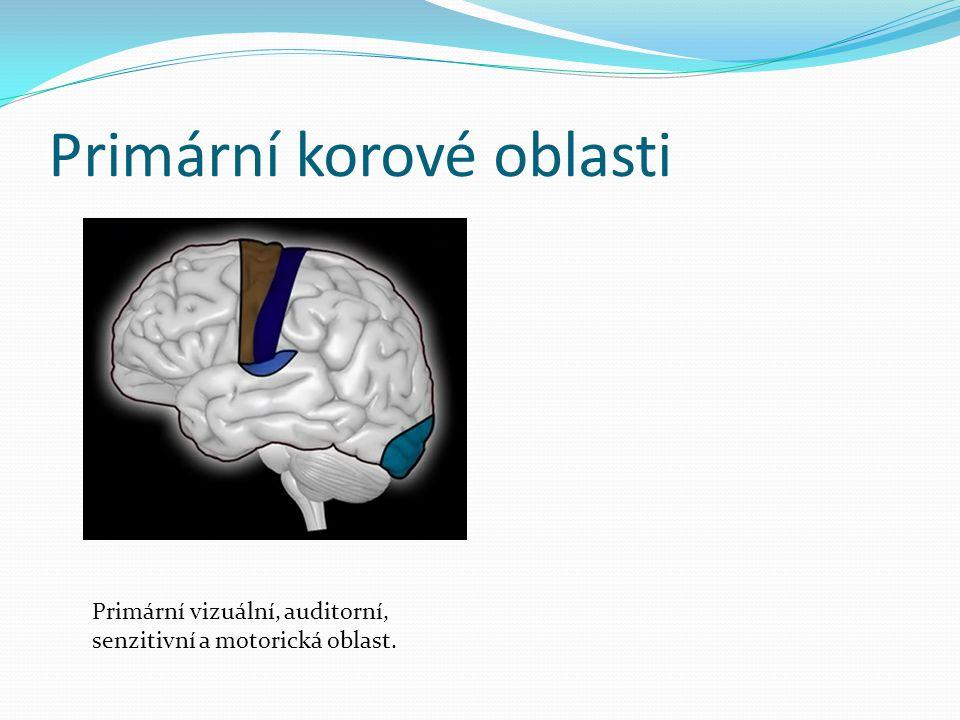 Primární korové oblasti Primární vizuální, auditorní, senzitivní a motorická oblast.