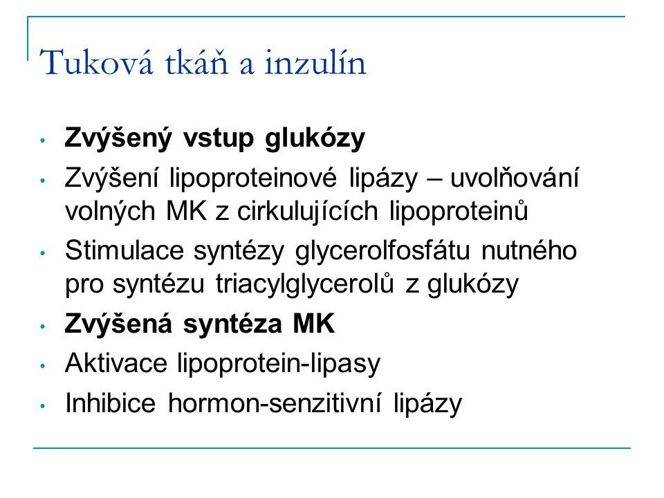 Tuková tkáň a inzulín Zvýšený vstup glukózy Zvýšení lipoproteinové lipázy – uvolňování volných MK z cirkulujících lipoproteinů Stimulace syntézy glyce