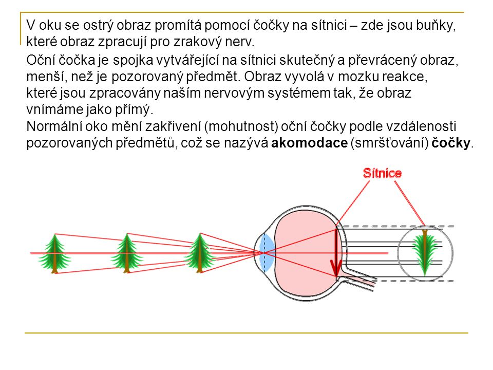 Největší vzdálenost, na kterou může oko akomodovat, je u zdravého oka v nekonečnu – vzdálený bod oka Nejbližší bod, který se ještě zobrazí ostře, je u zdravého oka ve vzdálenosti15 cm – blízký bod oka Doporučená vzdálenost na čtení, psaní, je u zdravého oka 25 cm – konvenční zraková vzdálenost, oko se neunaví tak rychle, jako při menší vzdálenosti.