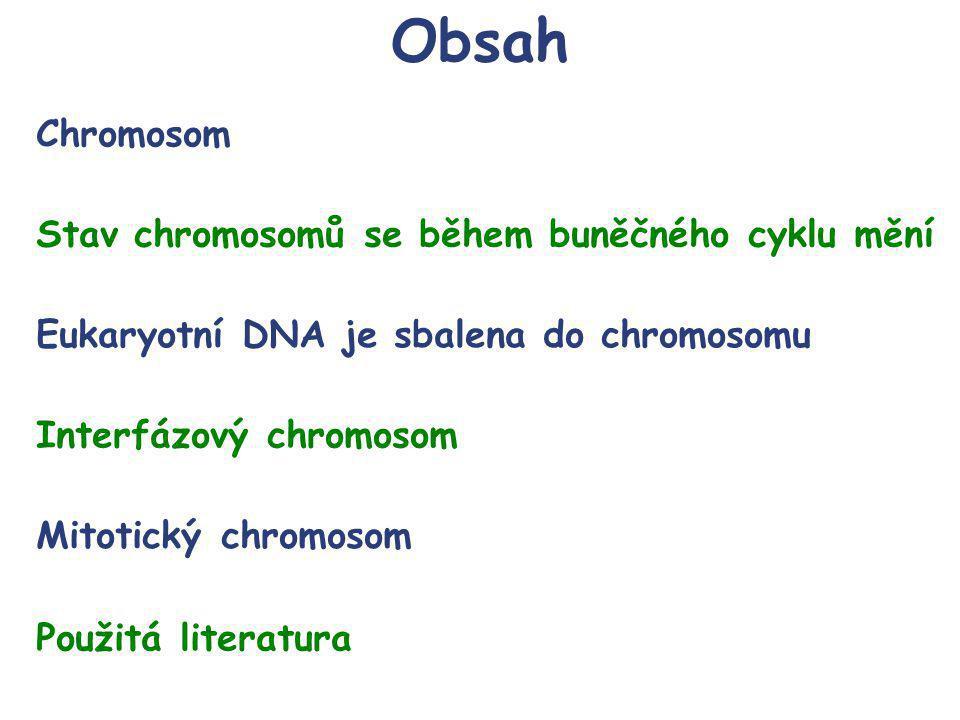 Obsah Chromosom Stav chromosomů se během buněčného cyklu mění Eukaryotní DNA je sbalena do chromosomu Interfázový chromosom Použitá literatura Mitotický chromosom