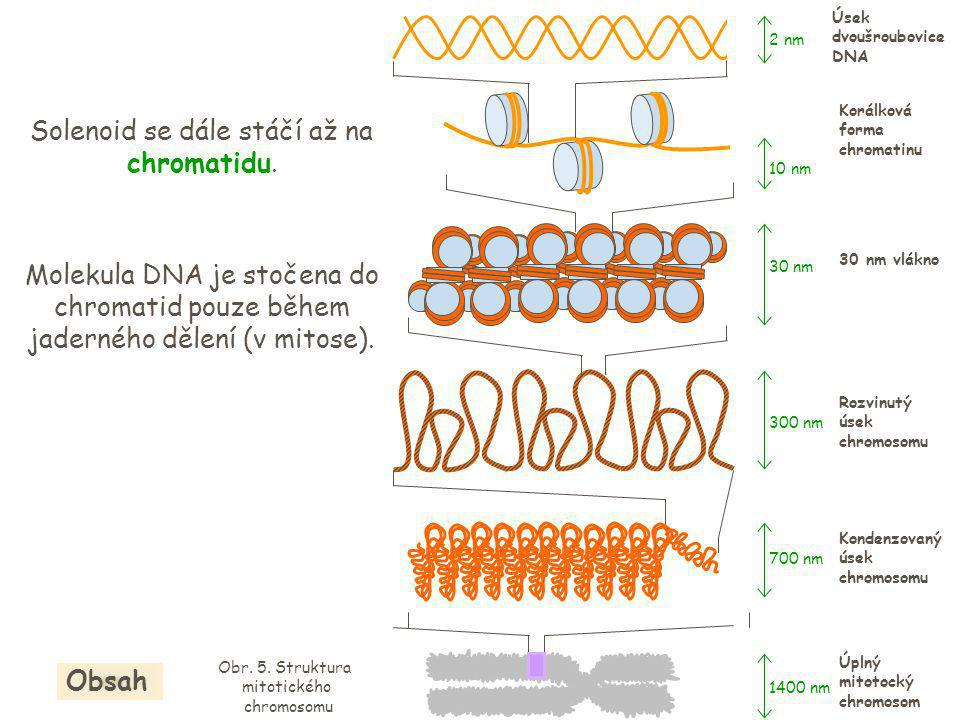 Molekula DNA je stočena do chromatid pouze během jaderného dělení (v mitose).