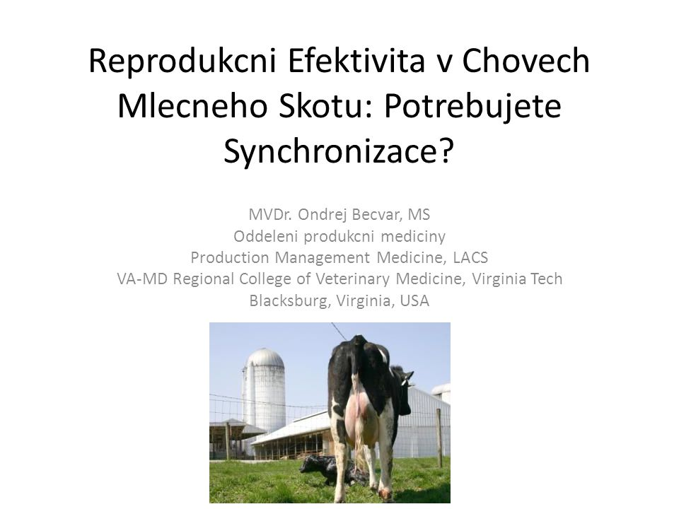 Reprodukcni Efektivita v Chovech Mlecneho Skotu: Potrebujete Synchronizace? MVDr. Ondrej Becvar, MS Oddeleni produkcni mediciny Production Management