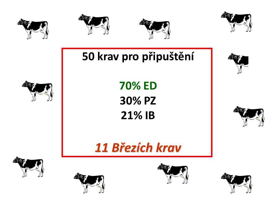 50 krav pro připuštění 70% ED 30% PZ 21% IB 11 Březích krav