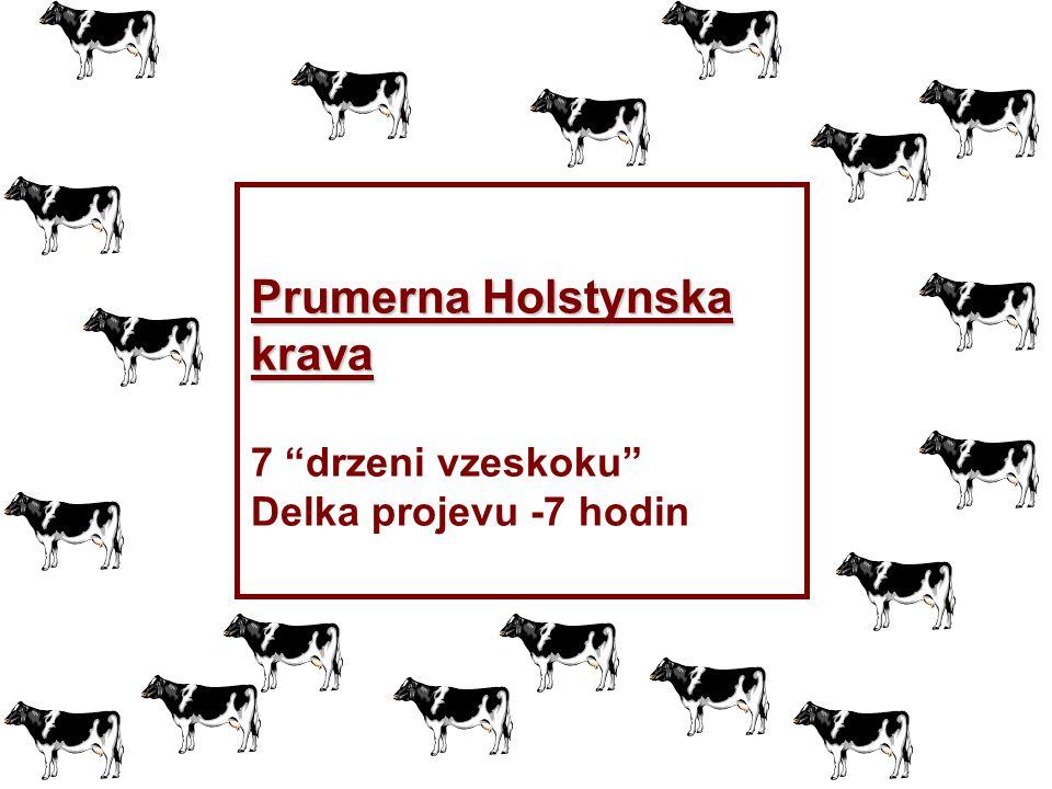 """Prumerna Holstynska krava 7 """"drzeni vzeskoku"""" Delka projevu -7 hodin"""