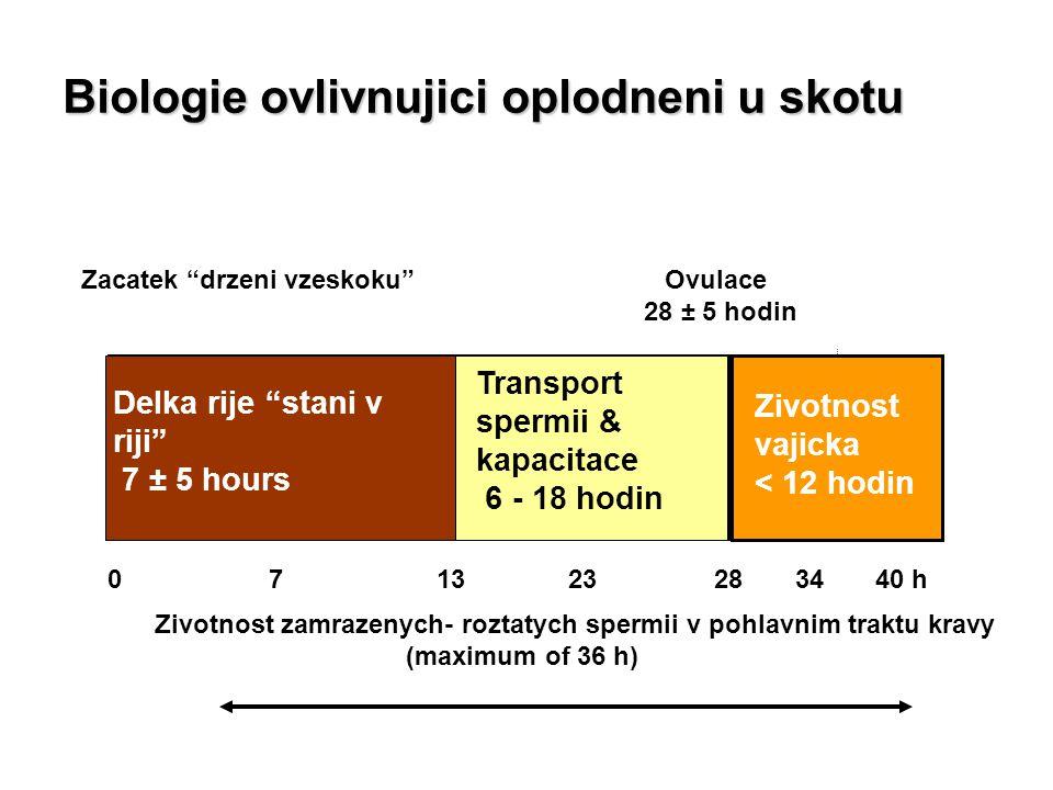 """Zacatek """"drzeni vzeskoku"""" Ovulace 28 ± 5 hodin 0 7 13 23 28 34 40 h Zivotnost zamrazenych- roztatych spermii v pohlavnim traktu kravy (maximum of 36 h"""