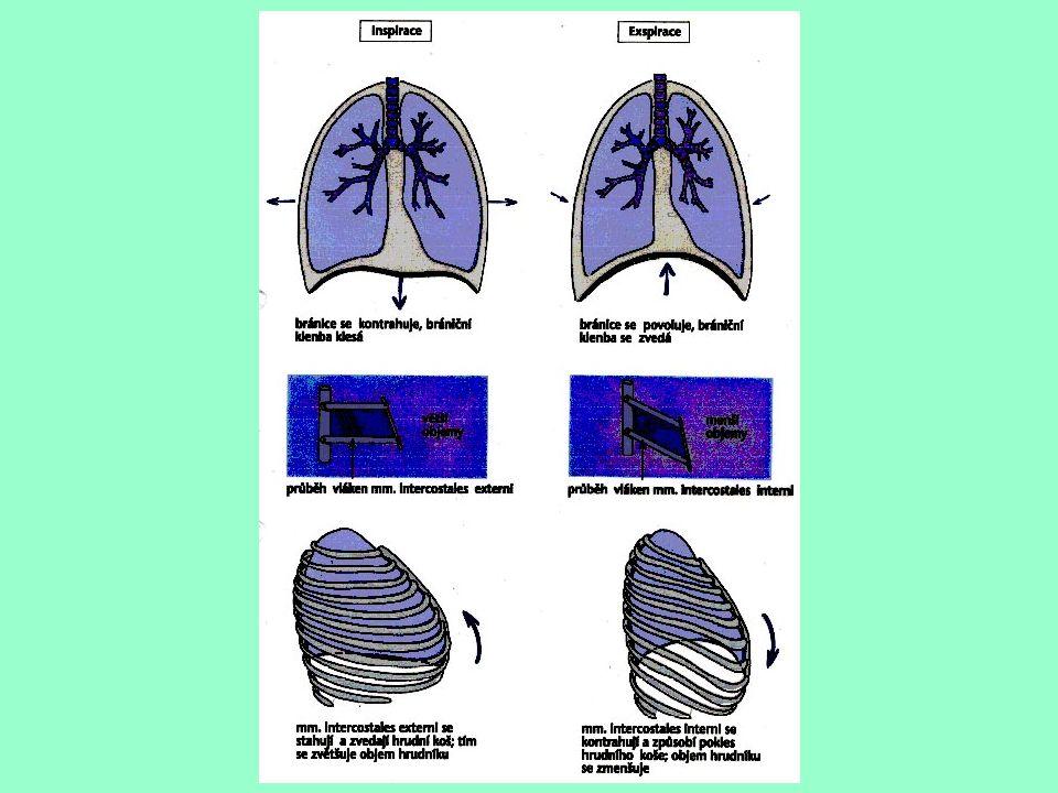 složka transportního kardiorespiračního systému změny: - reaktivní – bezprostřední reakce organismu - adaptační – výsledek dlouhodobého opakovaného tréninku Dýchací systém
