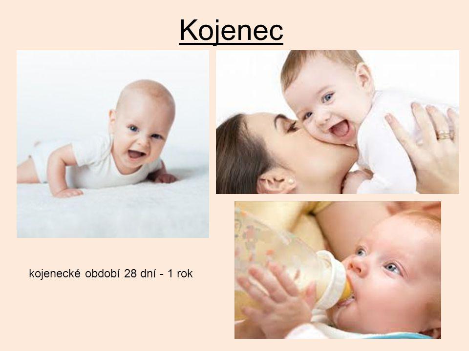 Kojenec kojenecké období 28 dní - 1 rok