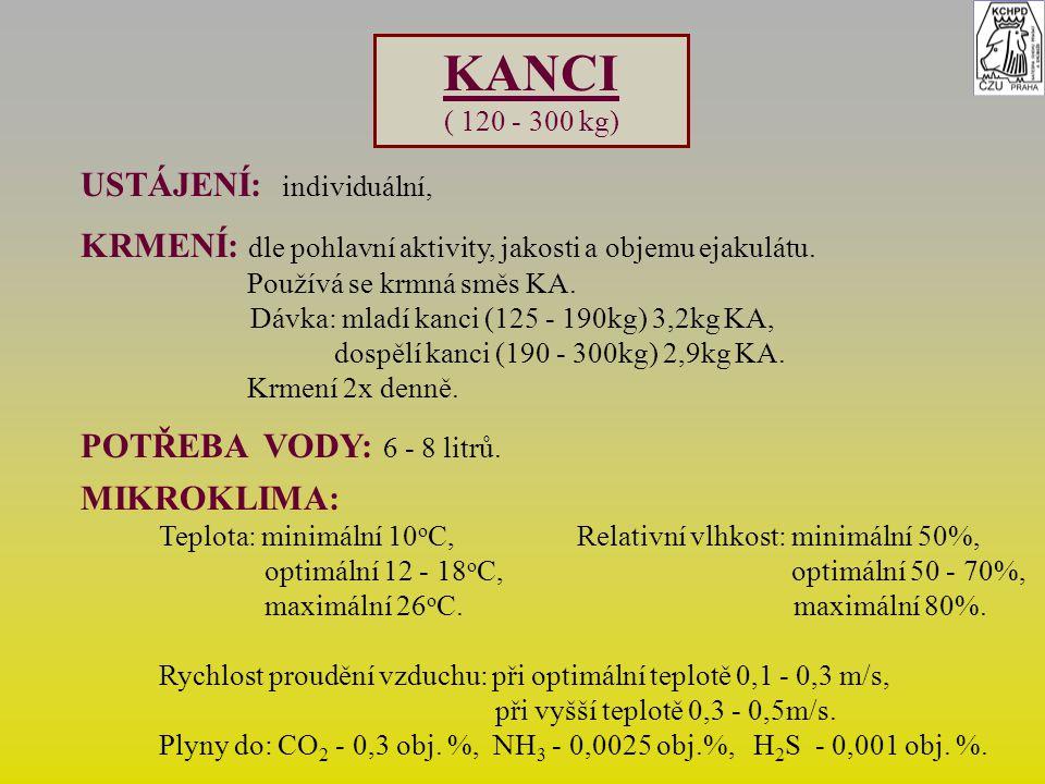 KANCI ( 120 - 300 kg) USTÁJENÍ: individuální, KRMENÍ: dle pohlavní aktivity, jakosti a objemu ejakulátu. Používá se krmná směs KA. Dávka: mladí kanci