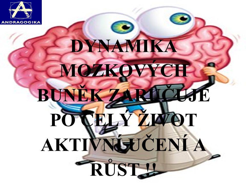 DYNAMIKA MOZKOVÝCH BUNĚK ZARUČUJE PO CELÝ ŽIVOT AKTIVNÍ UČENÍ A RŮST !!