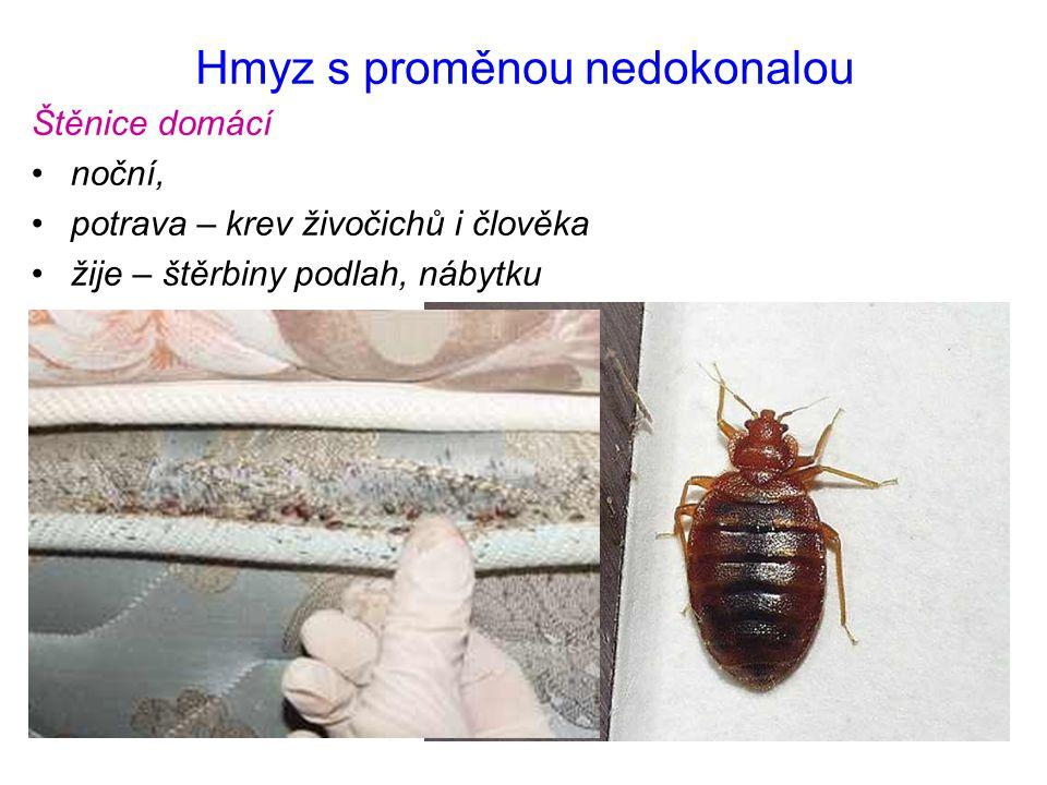 Hmyz s proměnou nedokonalou Štěnice domácí noční, potrava – krev živočichů i člověka žije – štěrbiny podlah, nábytku