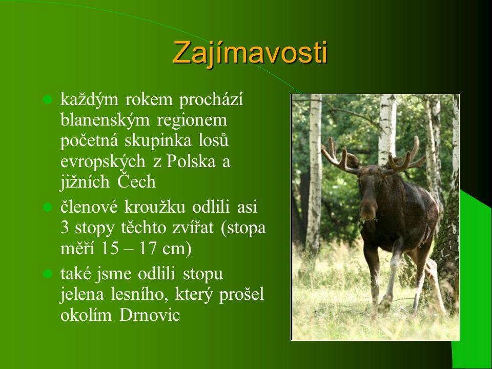 Zajímavosti každým rokem prochází blanenským regionem početná skupinka losů evropských z Polska a jižních Čech členové kroužku odlili asi 3 stopy těchto zvířat (stopa měří 15 – 17 cm) také jsme odlili stopu jelena lesního, který prošel okolím Drnovic