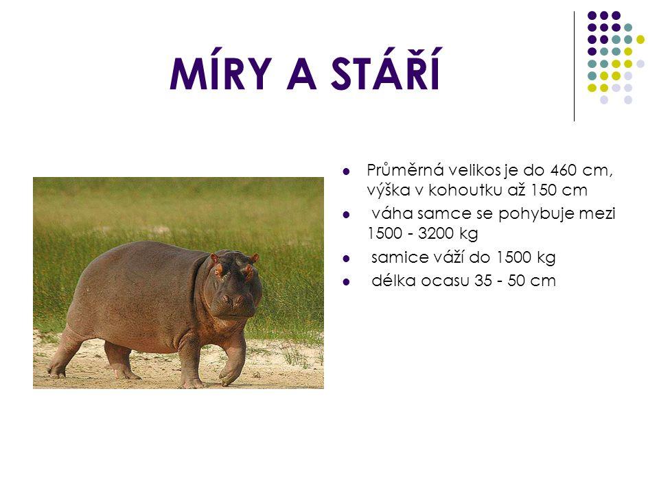 MÍRY A STÁŘÍ Průměrná velikos je do 460 cm, výška v kohoutku až 150 cm váha samce se pohybuje mezi 1500 - 3200 kg samice váží do 1500 kg délka ocasu 35 - 50 cm