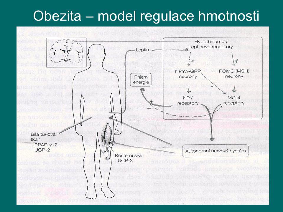 Obezita – model regulace hmotnosti