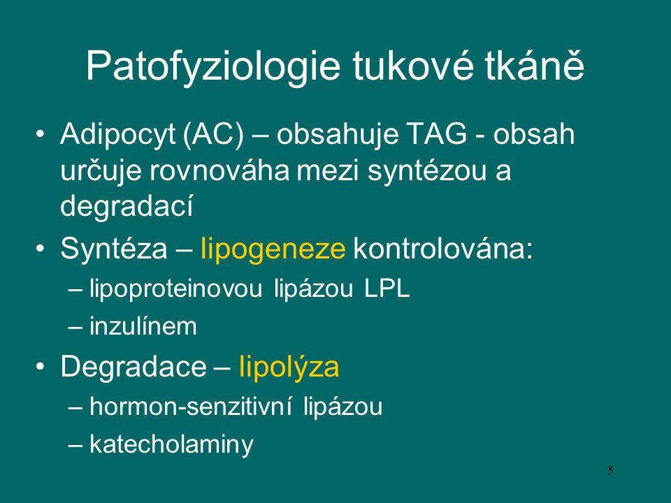 5 Patofyziologie tukové tkáně Adipocyt (AC) – obsahuje TAG - obsah určuje rovnováha mezi syntézou a degradací Syntéza – lipogeneze kontrolována: –lipo