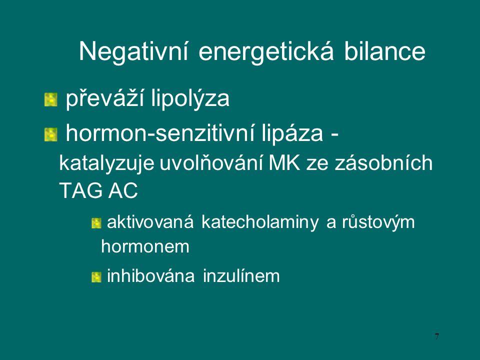 7 Negativní energetická bilance převáží lipolýza hormon-senzitivní lipáza - katalyzuje uvolňování MK ze zásobních TAG AC aktivovaná katecholaminy a rů