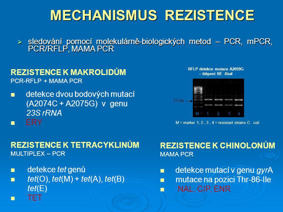 MECHANISMUS REZISTENCE REZISTENCE K MAKROLIDŮM PCR-RFLP + MAMA PCR detekce dvou bodových mutací (A2074C + A2075G) v genu 23S rRNA ERY REZISTENCE K CHI