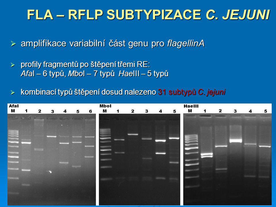 FLA – RFLP SUBTYPIZACE C. JEJUNI  amplifikace variabilní část genu pro flagellinA  profily fragmentů po štěpení třemi RE: AfaI – 6 typů, MboI – 7 ty