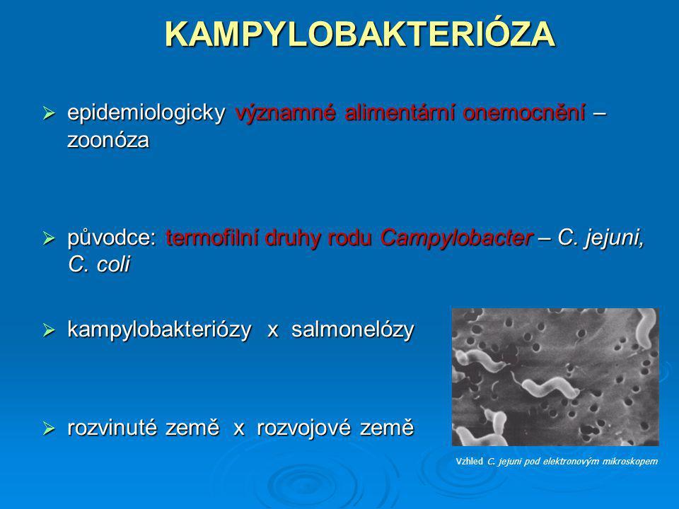 KAMPYLOBAKTERIÓZA  epidemiologicky významné alimentární onemocnění – zoonóza  původce: termofilní druhy rodu Campylobacter – C. jejuni, C. coli  ka