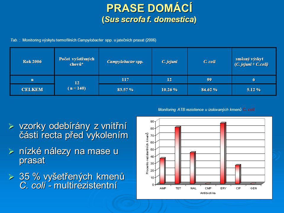 PRASE DOMÁCÍ (Sus scrofa f. domestica)  vzorky odebírány z vnitřní části recta před vykolením  nízké nálezy na mase u prasat  35 % vyšetřených kmen