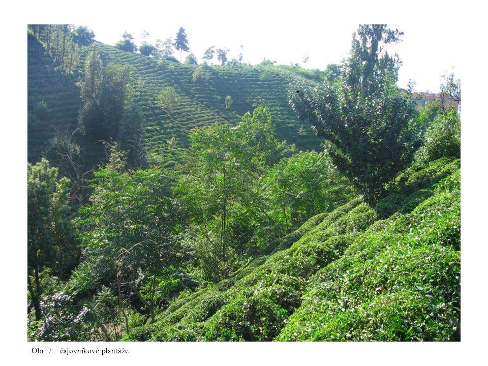Obr. 7 – čajovníkové plantáže