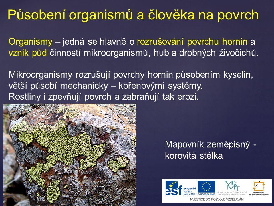 Působení organismů a člověka na povrch Organismy – jedná se hlavně o rozrušování povrchu hornin a vznik půd činností mikroorganismů, hub a drobných ži