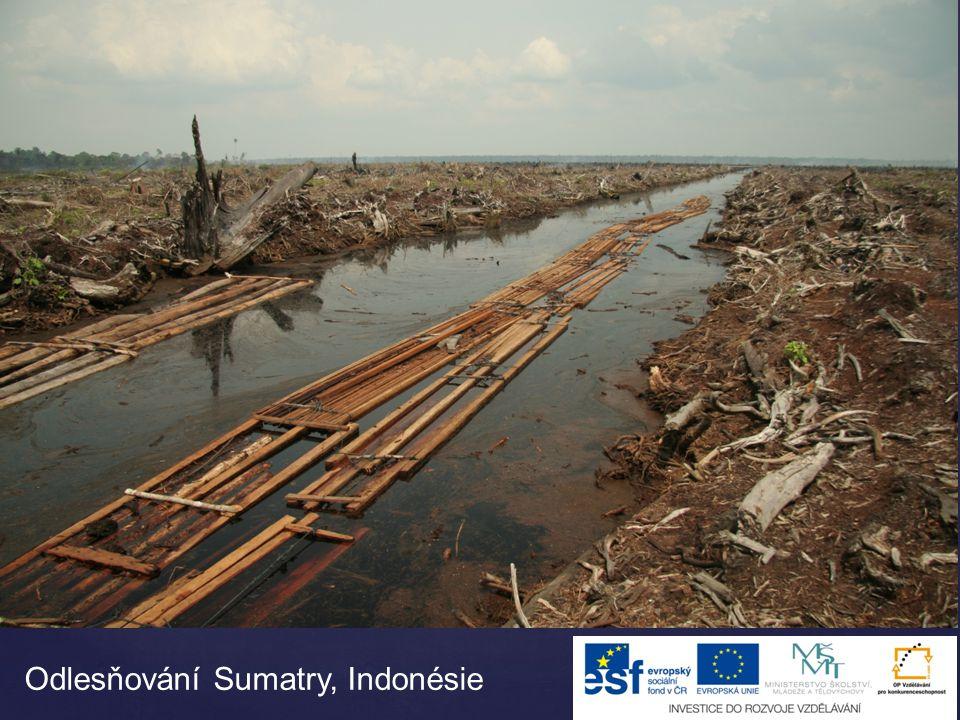 Odlesňování Sumatry, Indonésie