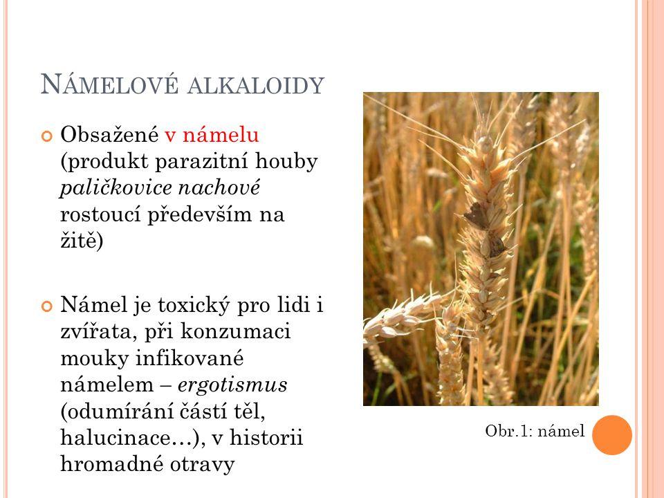 N ÁMELOVÉ ALKALOIDY Obsažené v námelu (produkt parazitní houby paličkovice nachové rostoucí především na žitě) Námel je toxický pro lidi i zvířata, př