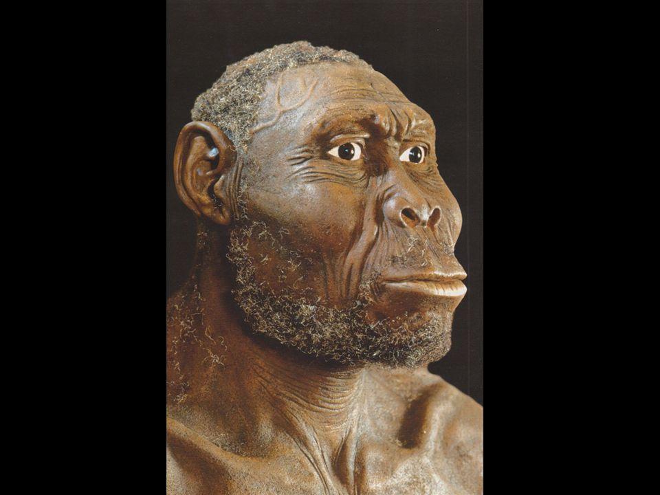 Dmanisi Lokalita v jižní Gruzii, kde byly nalezeny nejstarší lidské fosilie a kamenné nástroje mimo Afriku (1,9-1,7 mil.