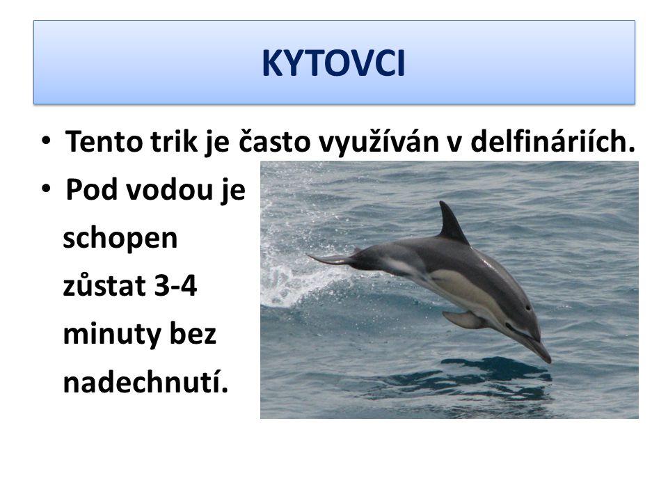 KYTOVCI Tento trik je často využíván v delfináriích. Pod vodou je schopen zůstat 3-4 minuty bez nadechnutí.