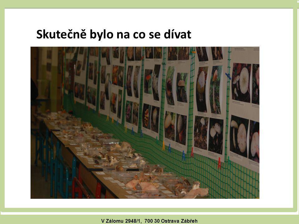 V Zálomu 2948/1, 700 30 Ostrava Zábřeh Skutečně bylo na co se dívat