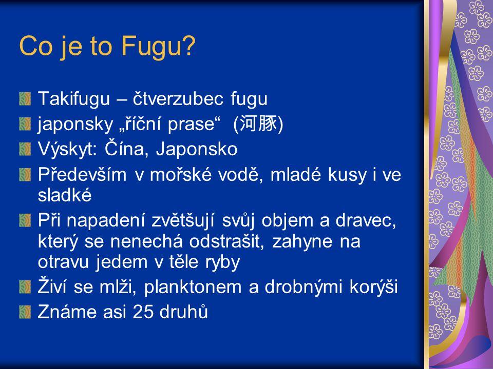 Jedovatost Fugu Zažívací ústrojí kolonizováno bakteriemi rodu Pseudomonas a Vibrio fischeri Tvoří neurotoxin Tetrodotoxin játra, pohlavní orgány a kůže ryby Nejjedovatější je Tiger Blowfish (T.rubripes) Současně nejžádanější druh