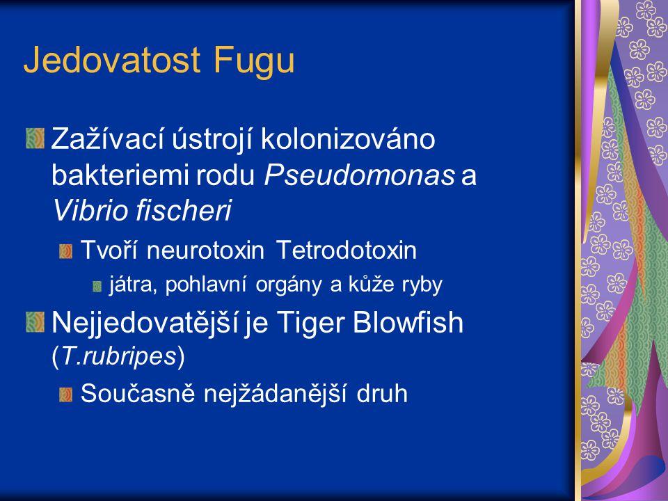 Jedovatost Fugu Každá ryba má dost jedu na zabití asi 30 dospělých lidí Ryby narozené a chované v zajetí nejsou jedovaté – záleží na potravě Stejná chuť Bezpečnost Nejsou však žádané