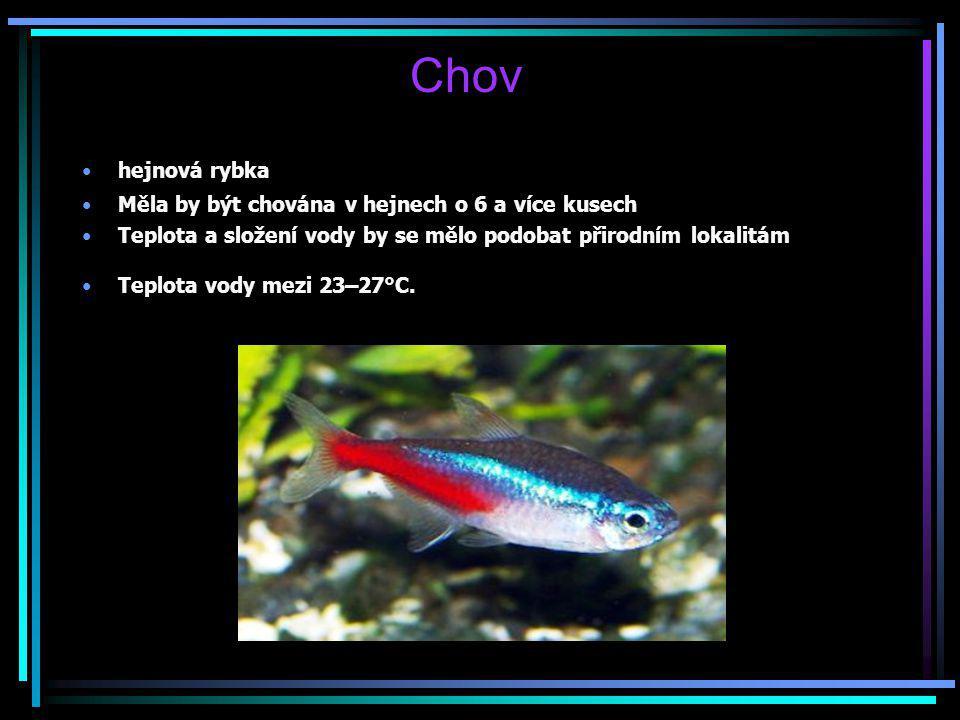 Chov hejnová rybka Měla by být chována v hejnech o 6 a více kusech Teplota a složení vody by se mělo podobat přirodním lokalitám Teplota vody mezi 23–
