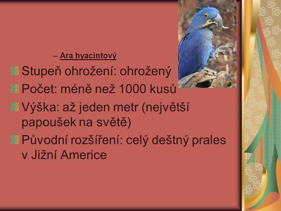–Ara hyacintový Stupeň ohrožení: ohrožený Počet: méně než 1000 kusů Výška: až jeden metr (největší papoušek na světě) Původní rozšíření: celý deštný prales v Jižní Americe