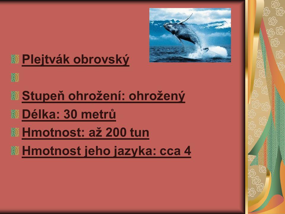 Plejtvák obrovský Stupeň ohrožení: ohrožený Délka: 30 metrů Hmotnost: až 200 tun Hmotnost jeho jazyka: cca 4