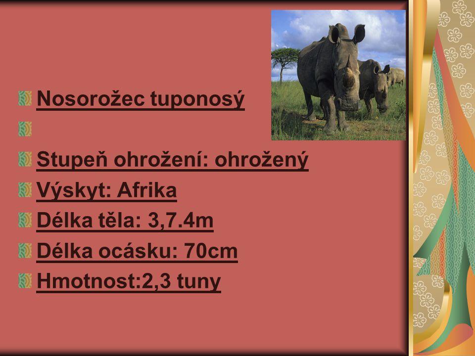 Nosorožec tuponosý Stupeň ohrožení: ohrožený Výskyt: Afrika Délka těla: 3,7.4m Délka ocásku: 70cm Hmotnost:2,3 tuny