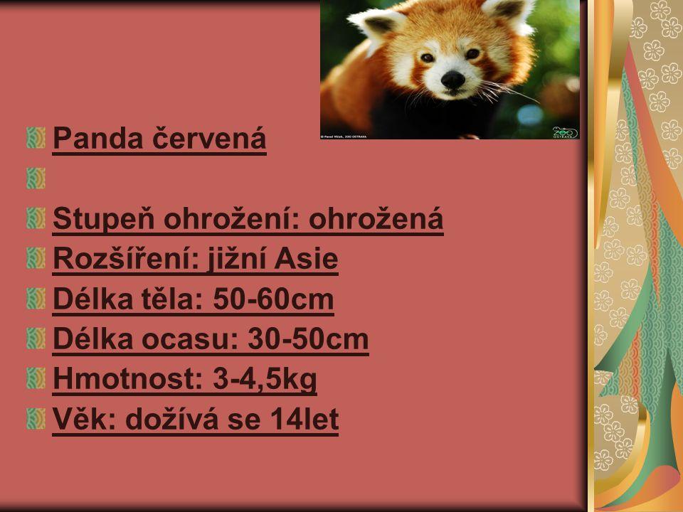 Panda červená Stupeň ohrožení: ohrožená Rozšíření: jižní Asie Délka těla: 50-60cm Délka ocasu: 30-50cm Hmotnost: 3-4,5kg Věk: dožívá se 14let