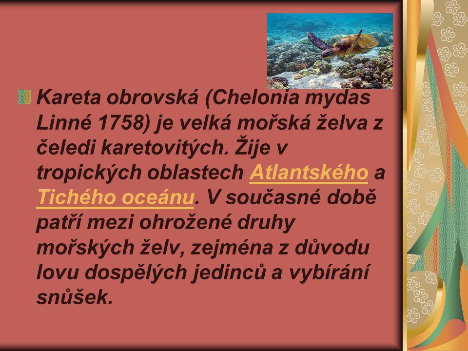 Kareta obrovská (Chelonia mydas Linné 1758) je velká mořská želva z čeledi karetovitých.