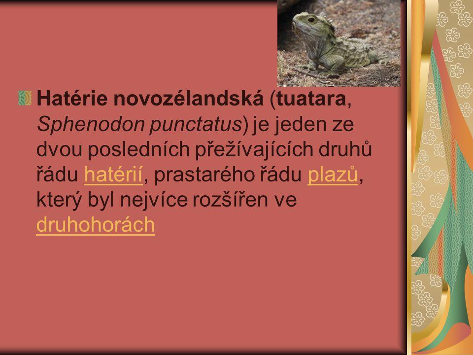 Hatérie novozélandská (tuatara, Sphenodon punctatus) je jeden ze dvou posledních přežívajících druhů řádu hatérií, prastarého řádu plazů, který byl nejvíce rozšířen ve druhohoráchhatériíplazů druhohorách
