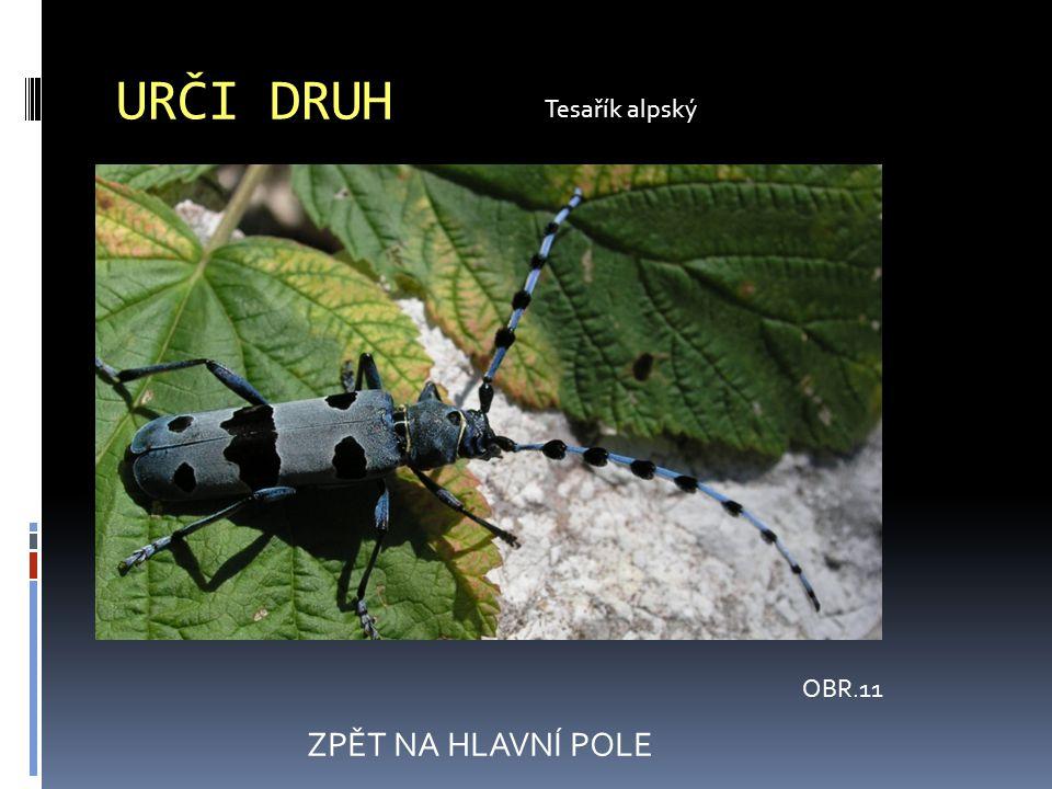 URČI DRUH OBR.11 ZPĚT NA HLAVNÍ POLE Tesařík alpský