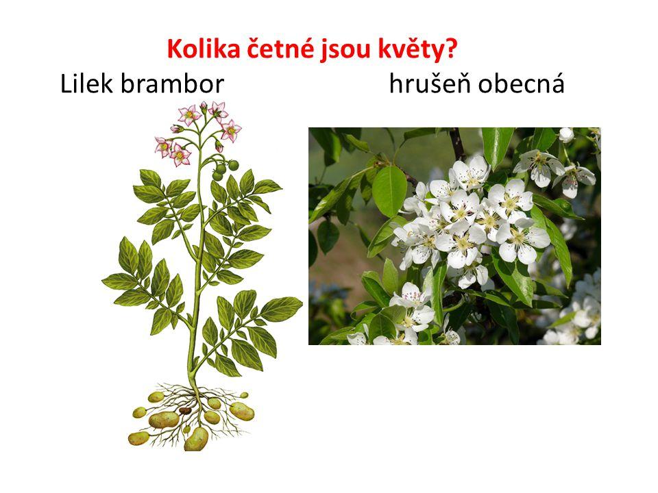Kolika četné jsou květy? Lilek brambor hrušeň obecná