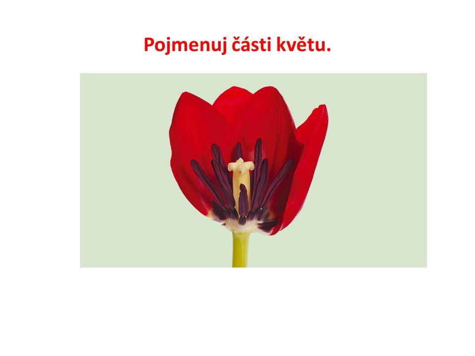 Pojmenuj části květu.