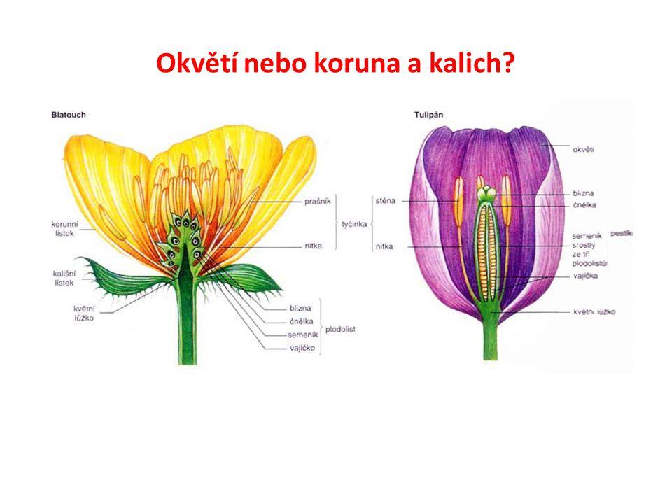 Okvětí nebo koruna a kalich?