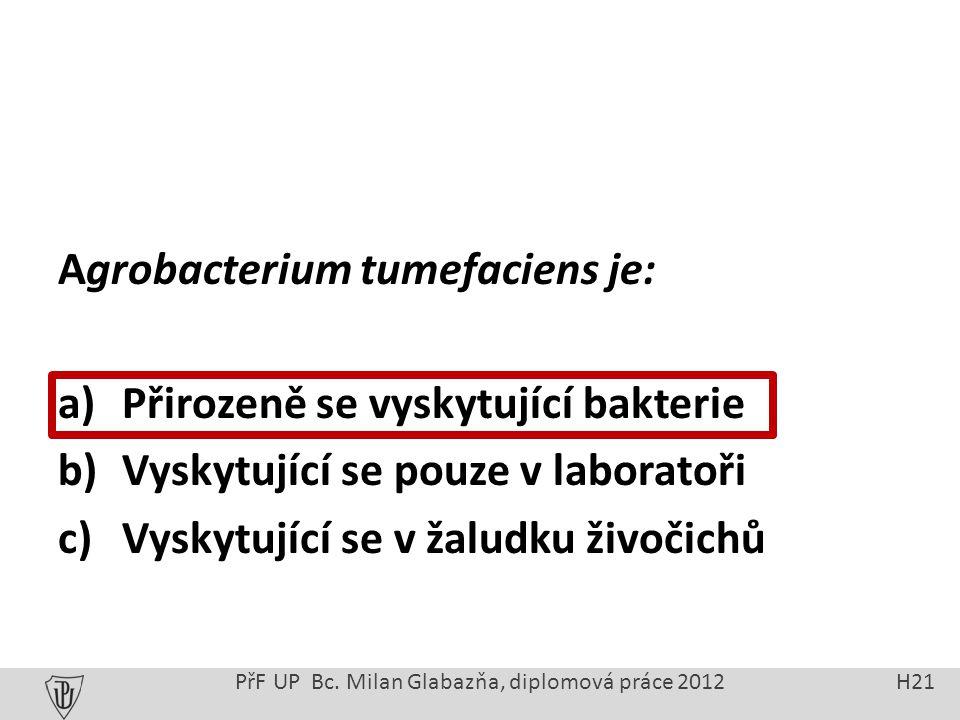 Agrobacterium tumefaciens je: a) Přirozeně se vyskytující bakterie b) Vyskytující se pouze v laboratoři c) Vyskytující se v žaludku živočichů PřF UP Bc.