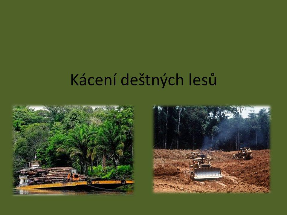 Kácení deštných lesů