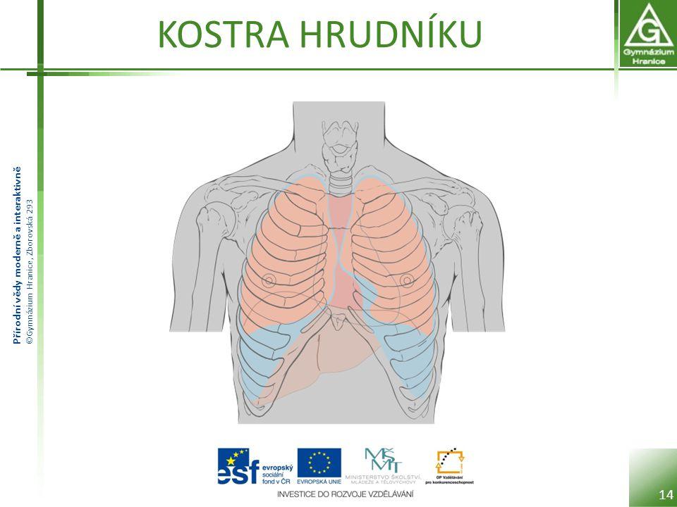 Přírodní vědy moderně a interaktivně ©Gymnázium Hranice, Zborovská 293 KOSTRA HRUDNÍKU 14